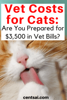 Vet bills can add up fast. One cat owner realized that the hard way when she received a $3,500 emergency vet bill. Here's what she learned.
