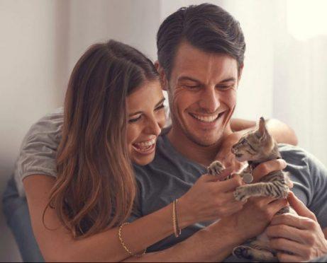 Costos veterinarios para gatos: ¿está preparado para $ 3,500 en facturas veterinarias?