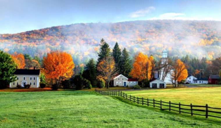 Forestry Consulting 101: How to Run a Successful Business in a Rural Area