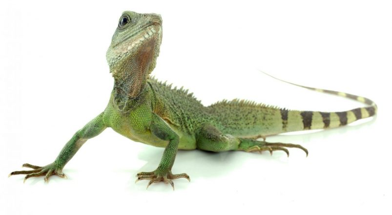 What Is Workers' Compensation? Lessons I Learned From a Lizard
