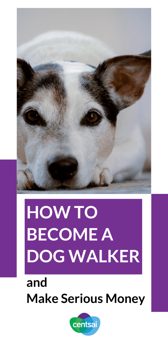 Have you ever wondered how to become a dog walker? The process (and the income) may surprise you. Check out our dog walking tips and make more money! #sidehustle #makeextramoney #CentSai #extraincomeideas #waystomakemoney #moneytip