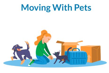 Mudarse con mascotas